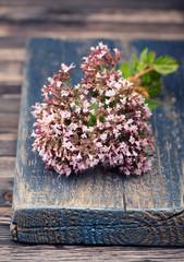 Marjoram Origanum vulgare herb