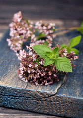 Marjoram Origanum vulgare and mint. Herbs.