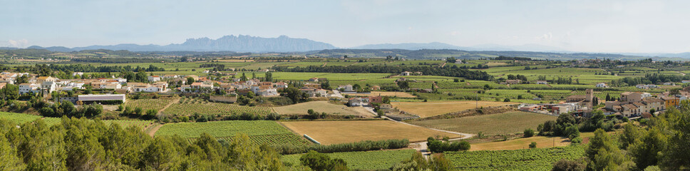 Vineyards with Montserrat peaks at background