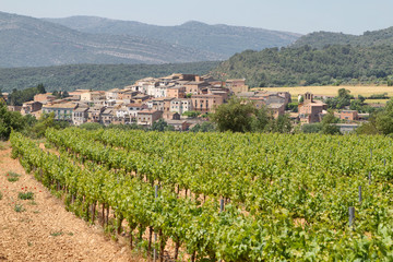 Vineyards with picturesque village at background