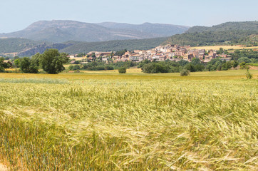 Field of wheat with picturesque village at background