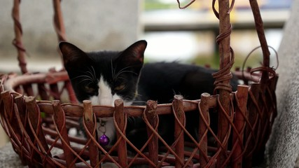 Little Cat in Wicker Basket. Cute Kitten.