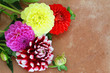 Colorful dahlia flowers on terracotta surface with copy space