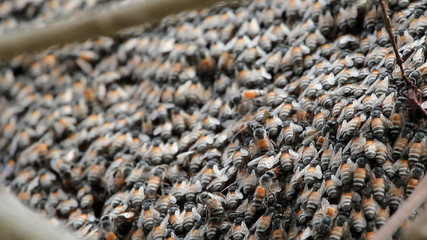 Set collection montage, close up of honey bees in a swarm
