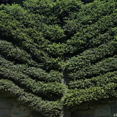 Trim tree