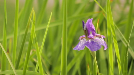 Orchid flower in green grass