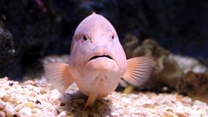 Set collection montage, fish in aquarium