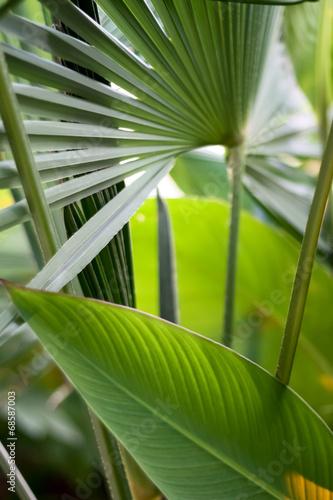 Papiers peints Palmier Tropical Leaves Background