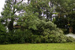 Storm Damage Large Tree and Building