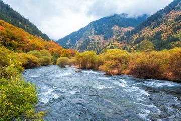 autumn forest in jiuzhaigou