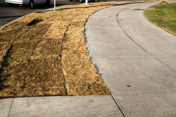 Sod installlation- dead or dormant?
