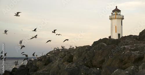 Seagulls Fly Shorebirds Rock Barrier Point Wilson Lighthouse
