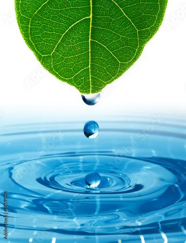 zielony-lisc-z-rozpryskiwania-kropli-wody