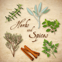 Herbs, Spices, Rosemary, Sage, Chervil, Cinnamon, Thyme, Oregano