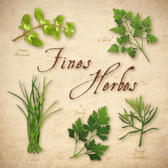 French Fines Herbes, Marjoram, Chervil, Chives, Parsley Tarragon