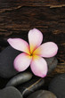 A frangipani and stones on old wood