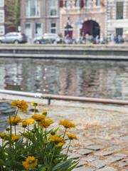 Haarlem, Netherlands. Typical urban view.