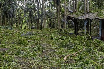 Typhoon Aftermath