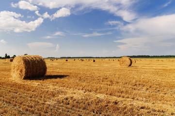 Сельский пейзаж. Август 2014. 01.