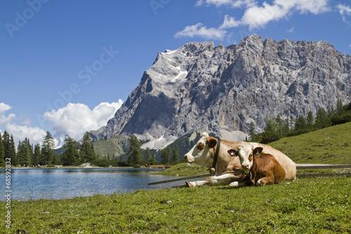 Kühe am Seeebensee © Hans und Christa Ede