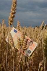 agriculture business concept - euro banknote on wheat ears