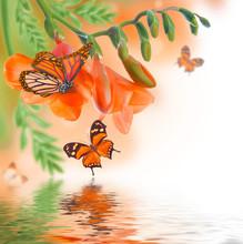 Wiosna żółty pierwiosnek i motyl, kwiatowy tle