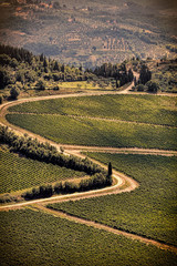 Vintage view hills of Tuscany with vineyard