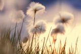 Fototapety Polar flowers