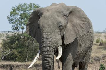 Kenia-Elefant-19573