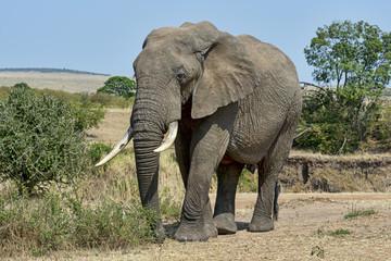 Kenia-Elefant-19567
