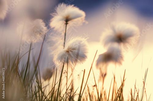 Polar flowers - 68598073