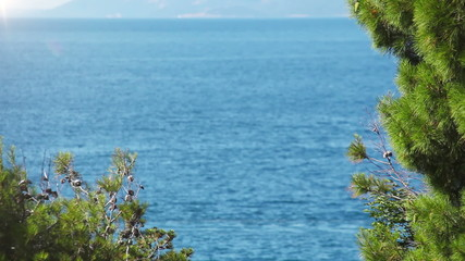 Fforeground pine branches with deep blue sea background