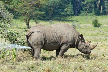 Kenia-Nashorn-19050