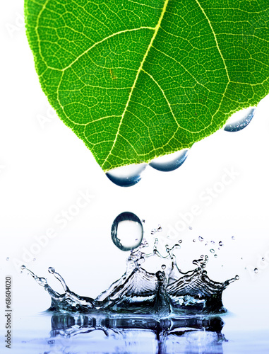 Papiers peints Flore aquatique green leaf with water drops and splash isolated on white