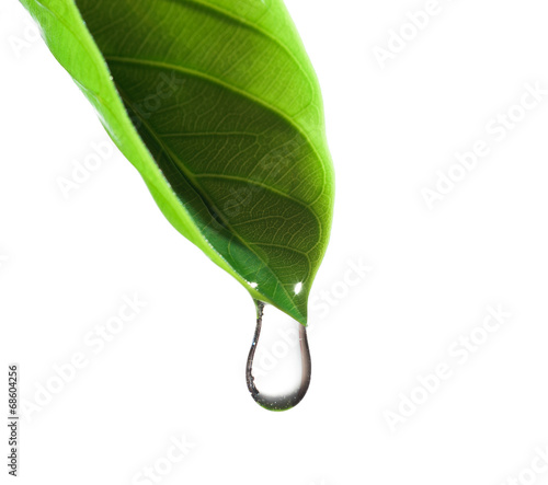 Poster Water planten water drop and green leaf