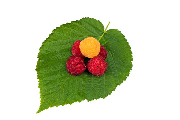 raspberries on a leaf isolated on white background