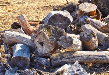 leña de encina, madera, troncos, combustible