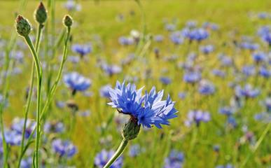 Wildblumen im Feld