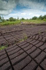 peat bog field cultivation