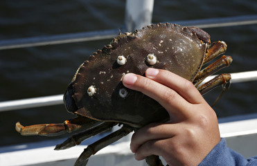 Hand of child holding large crab