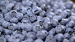 Portion of Blueberries (seamless loopable)