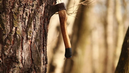 Axe unexpectedly get into tree trunk carving a lot of chips