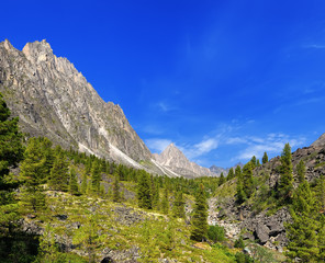 Sunny day in a Siberian mountain valley