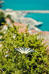 Beautiful butterfly and Karlovasi port on background