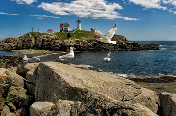 Gulls at Maine Lighthouse