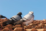 two grey pigeon sitting on the old street roof