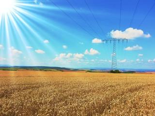 Überlandleitung auf dem Weizenfeld