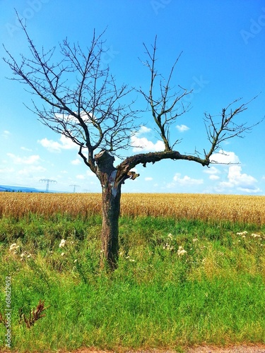 canvas print picture alter Baum am Feldrand