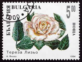 Postage stamp Bulgaria 1994 White Rose
