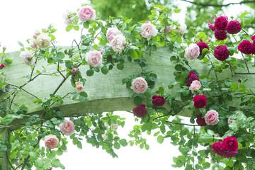 バラのアーチ バラ バラ園 ローズガーデン